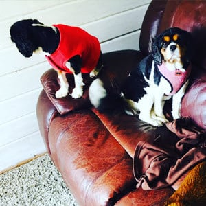 dog_boarding_reigate