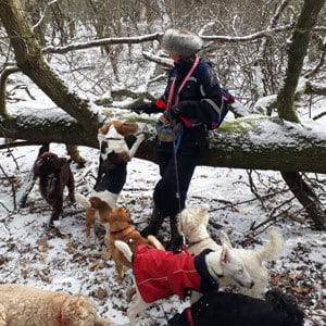 dog walking redhill dogs in snow