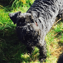 dog_walking_reigate_testimonial_3