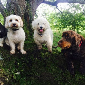 doggy daycare mersham dogs in tree