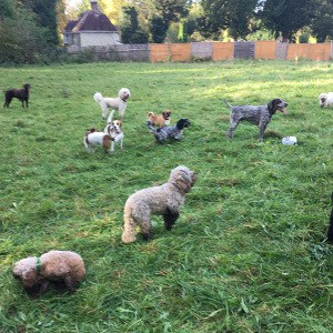 doggy_daycare_merstham