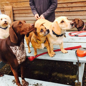 doggy_daycare_merstham_2