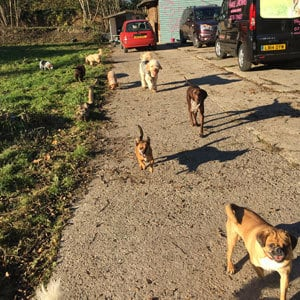 doggy_daycare_redhill