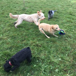 doggy_daycare_reigate
