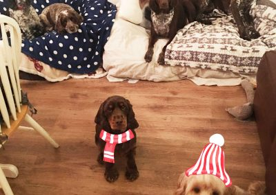 dogs_in_christmas_hats